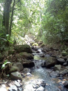 Quebrada El Pato